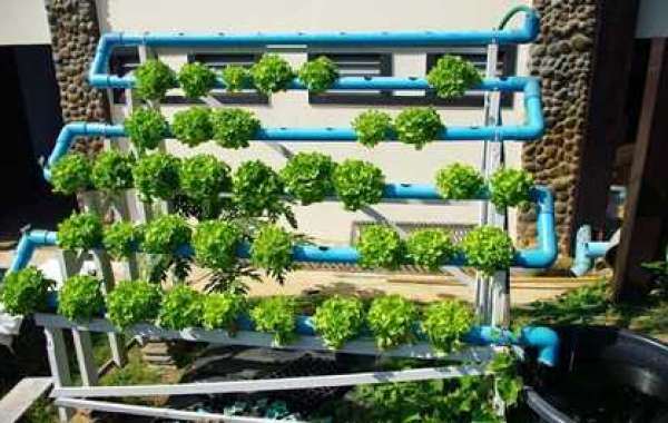 Hydroponics - The new generation cultivation method