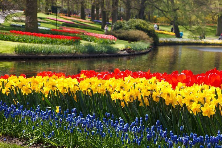 The Daffodils By William Wordsworth- Summary and Questions Answers | Smart eNotes