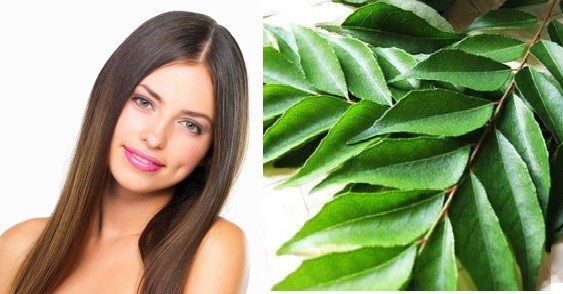 Curry leaves benefits Home R » Health Secret Tips