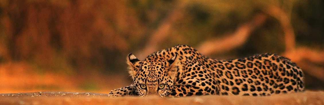 Cilliers Safaris Cover Image