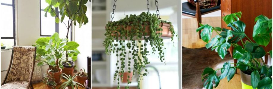 Luwasa Indoor Plant Hire Cover Image
