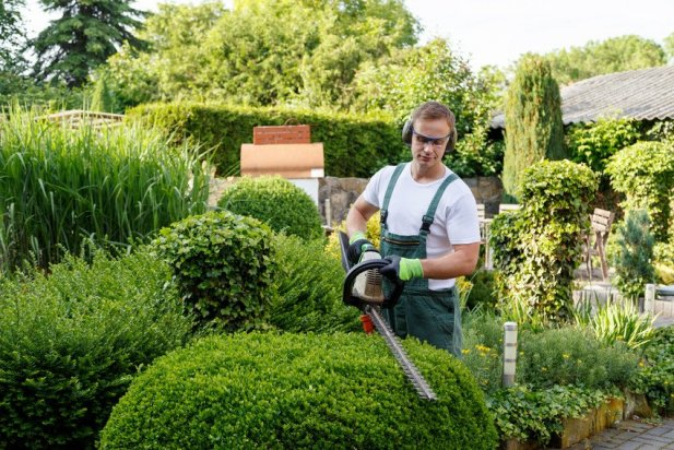 Want to find the most expert tree surgeons? Read on for tips! Article - ArticleTed -  News and Articles