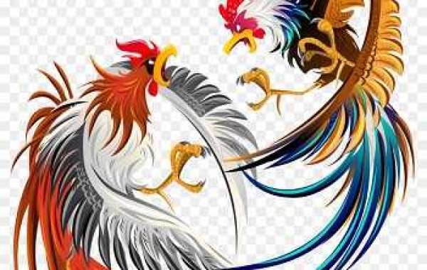 Key Facts Related To Sabung Ayam Online