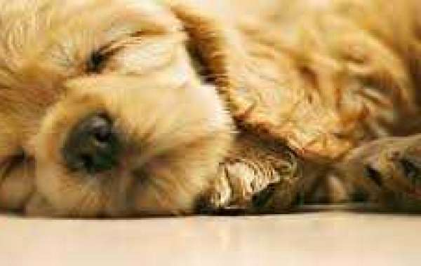 Why Dog Overnight Daycare is Beneficial for the Canines