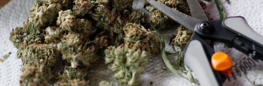 Online MMJ Los Angeles Cover Image
