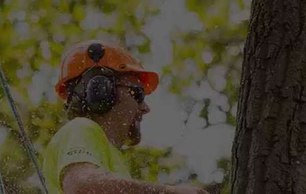 How You Get Quality Tree Trimming Services With Expert Techniques?