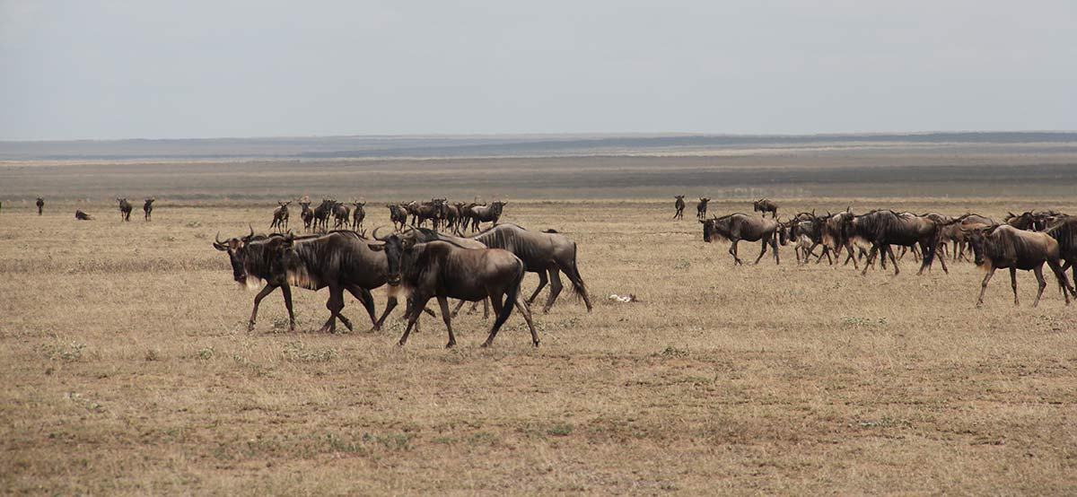 Get Amazed With The Wildlife in Tanzania