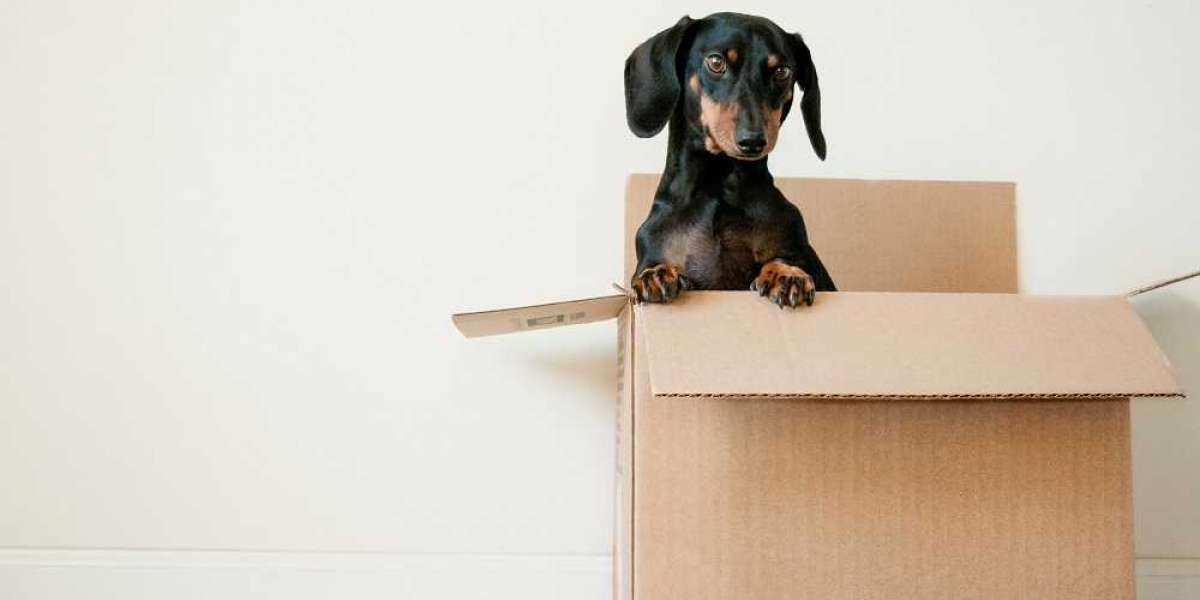 The Best Tips For Moving With Pets