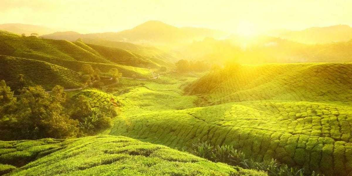 Why should you choose Kerala for your vacation trip?