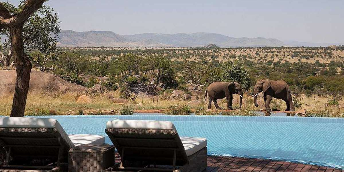 Tour Companies in Tanzania Offers Attractive Packages for African Safari Tours