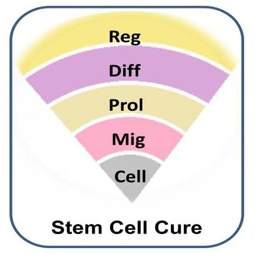 Health-Care — Is Stem Cell Treatment Effective?