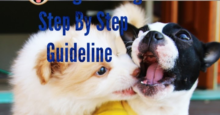 Dog Training In Hindi - Guideline to Step-by-Step