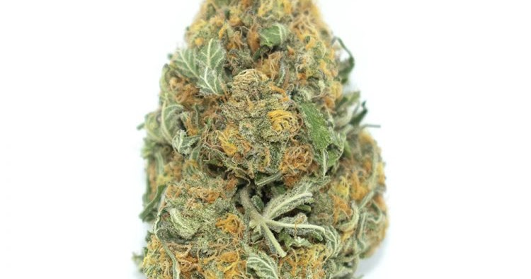 Cannabis Flower Canada: Some interesting facts about Marijuana that everyone should know