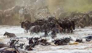 Wildebeest Migration Safari in Tanzania - Global Leisure and Backpacking