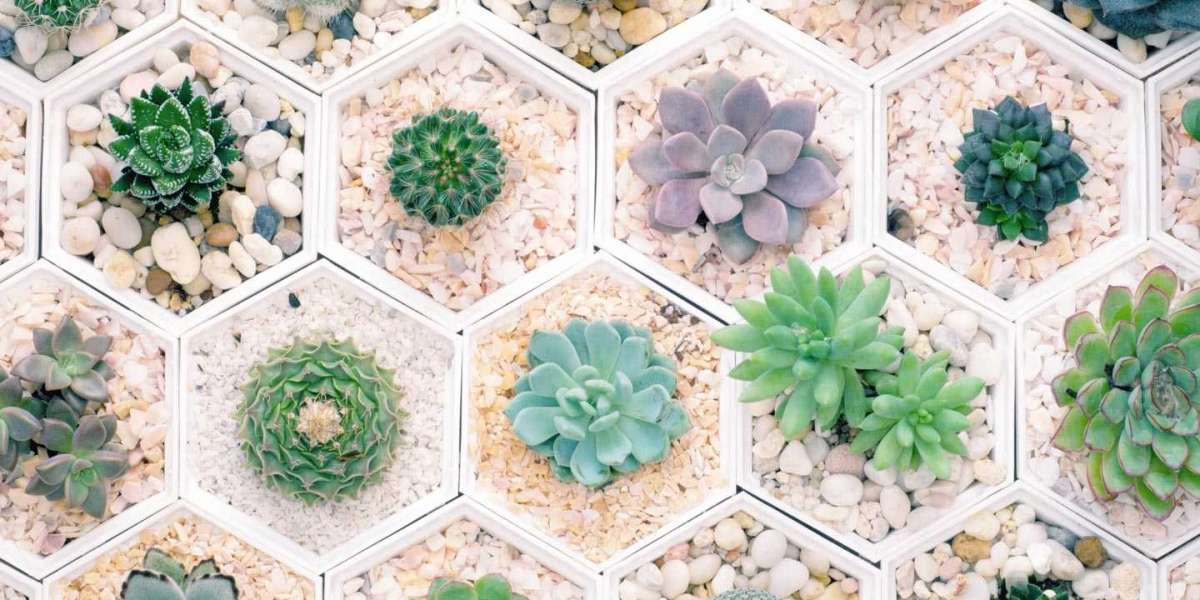 Important and Well-known Types of Succulents
