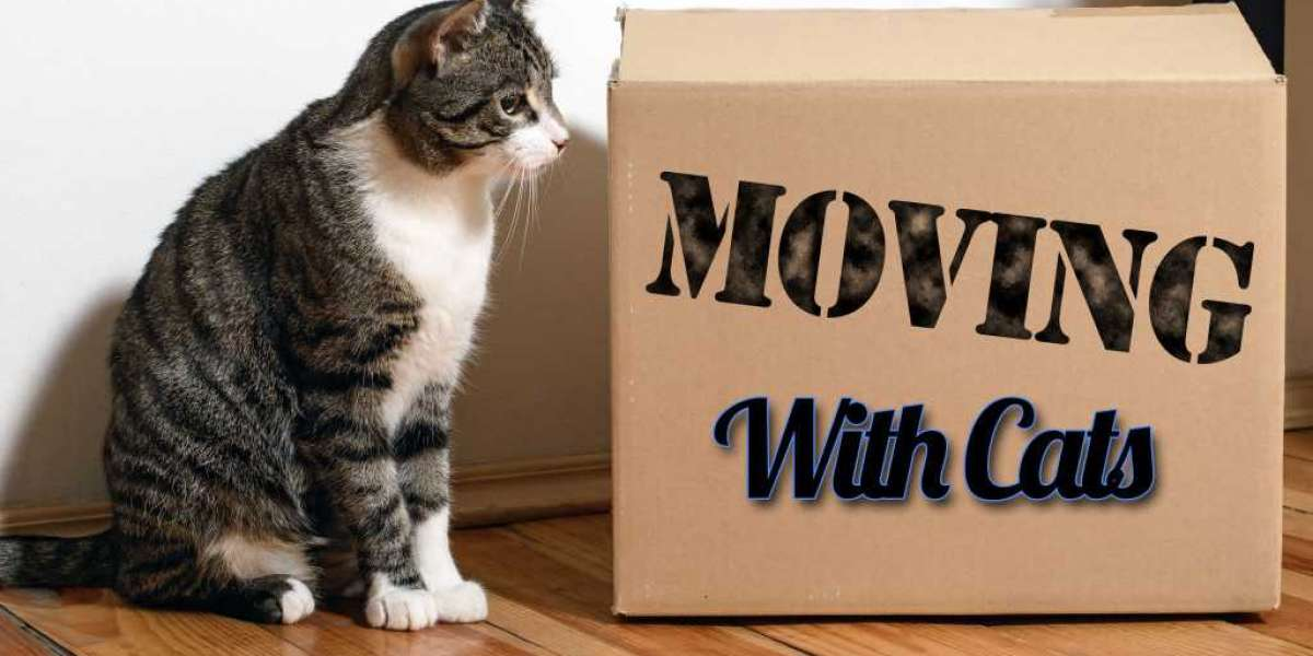 Evaluate Your Ideal Moving Company