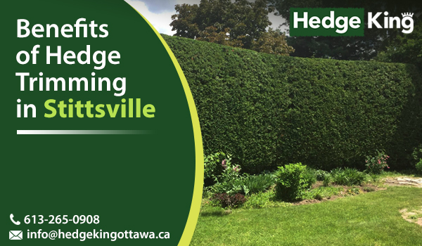 Benefits of Hedge Trimming in Stittsville - Hedge King