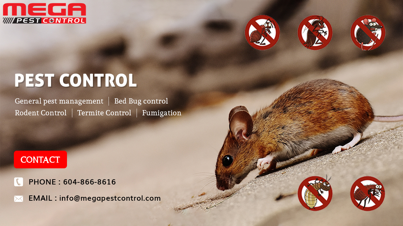 Save Money By Hiring Best Pest Control Service