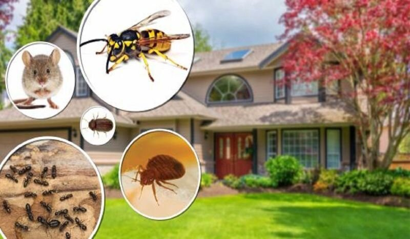 Why should you hire professional pest control services?