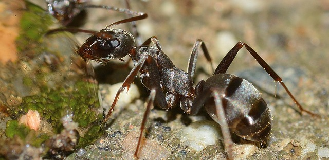 A Lot of facts about ants | mind-blowing facts about ants » Search Job24