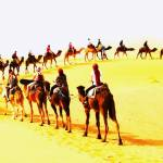 Sahara Holiday Tours profile picture