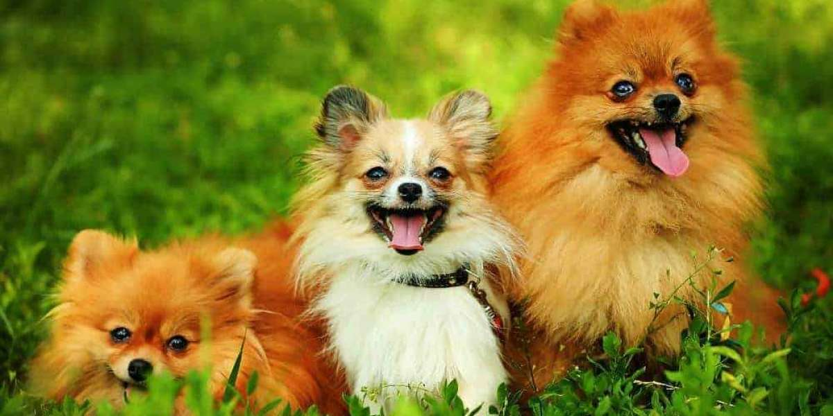 Top 10 Cutest Small Dog Breeds in the World