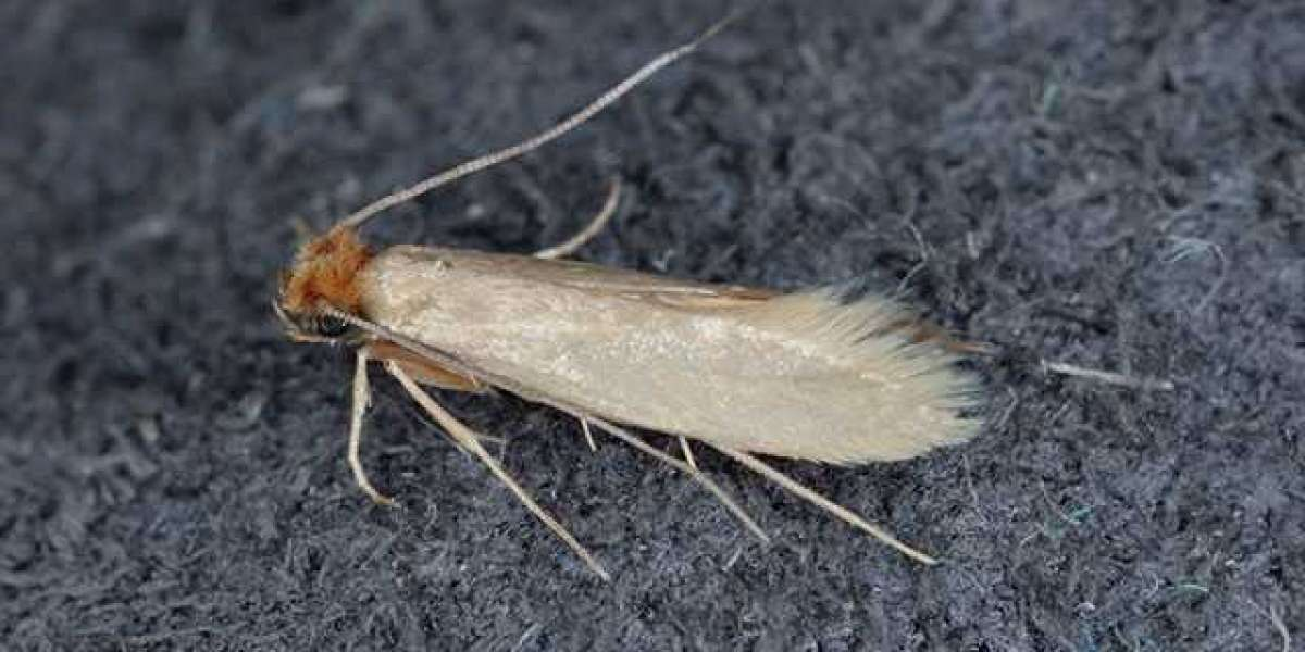 Professional Moth Control and Treatment Services for Residential and Commercial, UK