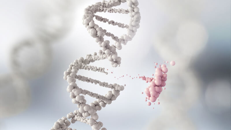 DNA Genealogy: Its Structure and Replication - Ancestry
